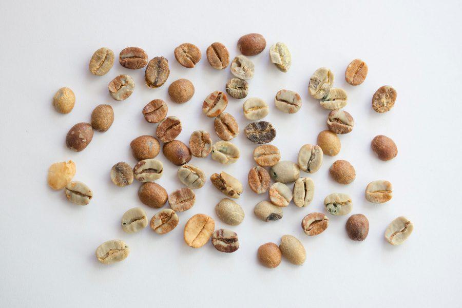コーヒー生豆に含まれる欠点豆の種類